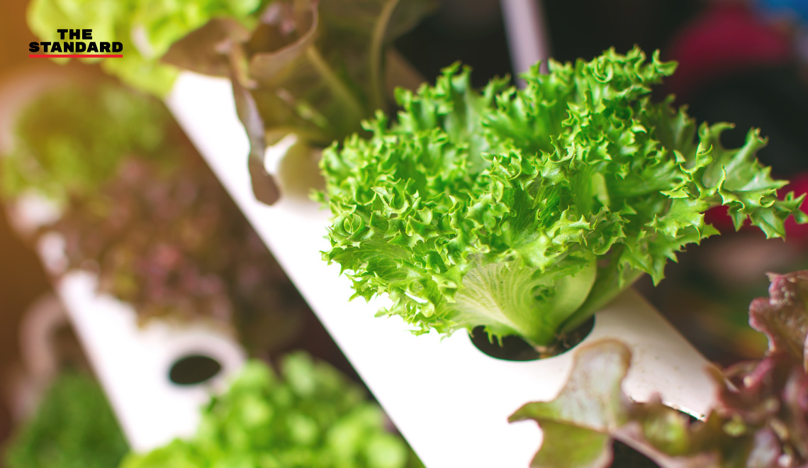 Hydroponic-Vegetables_cover_